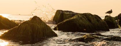 Diga olá! ao mar-miado foto de stock
