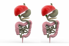 Digestive system Stock Images