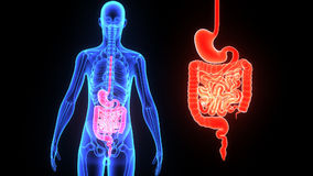 Digestive system stock video