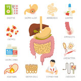Digestive System Icons Set Stock Photos
