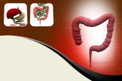Digestive systemdigestive system Stock Images