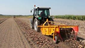Digger πατατών σε λειτουργία στον τομέα απόθεμα βίντεο