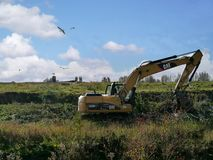 Digger doing groundwork in heavy undergrowth. Ground reclamation by digger with seagulls above Stock Photos