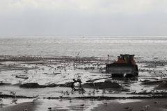 Digger in mud flat stock image