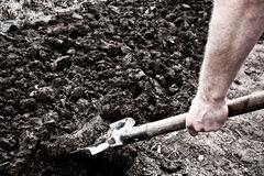 Digging. The earth with a spade before planting Stock Photography