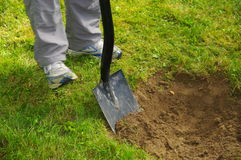 Digging. A hole in the lawn for a bush Stock Images