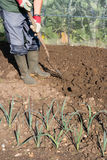 Digging Allotment Stock Photography