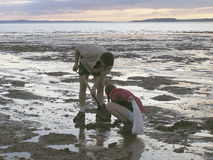 Digging buddies. Father and girl digging clams at sunset in  Glooscap, Nova Scotia, Canada Stock Photo