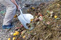 Digging compost. Gardener using a shovel to dig in and turn over garden compost from kitchen scraps Stock Image