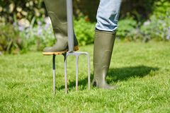 Digging fork. Woman aerating the garden lawn with a digging fork Stock Photography