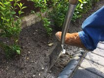Digging garden with spade. A close up of a digging spade stuck in the ground in a garden and a man`s foot on it Royalty Free Stock Photo