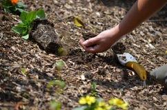Digging in the garden Stock Photos