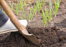 Digging ground in spring Royalty Free Stock Photography