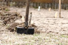 Digging in the home garden. Stock Images