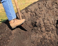 Digging in pile of topsoil. Woman wearing denims and workbooks,digging in a pile of topsoil. image shows foot and part of leg Stock Image