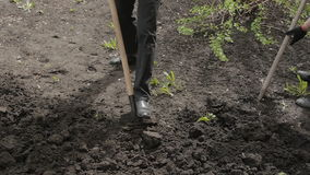 Digging shovel earth, soil processes stock footage