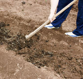 Digging a soil Stock Images