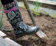 Digging soil in greenhouse. Royalty Free Stock Images