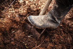 Digging The Soil. Leg in gumboot on shovel digging the soil Stock Images