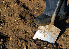 Digging with a spade. A close up of a foot pushing on a spade digging the ground stock photo