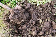 Digging with spade Royalty Free Stock Image
