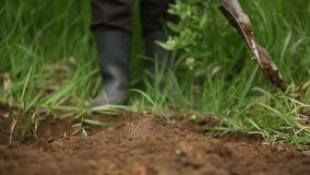 Digging spring soil with shovel. stock video footage