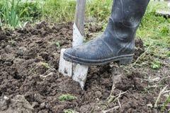 Digging spring soil with shovel. In the garden Stock Photos