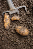 Digging up tatties Royalty Free Stock Photography