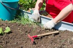 Digging up weeds Stock Image