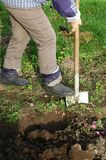 Digging. Woman digs her garden with a shovel Stock Image