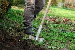 Digging. Woman digs her garden with a shovel Royalty Free Stock Photography