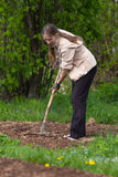 Digging woman in the garden Royalty Free Stock Images