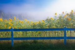 Digitaal verbeterd beeld van zonnebloemen, Stowe Vermont, de V.S. royalty-vrije stock foto's