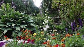 Digitais de Zinias e jardim da alfazema video estoque