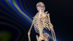 Digital Animation of a human Skeleton stock video footage