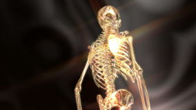 Digital Animation of a human Skeleton stock footage
