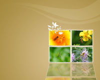 Digital background Stock Photography