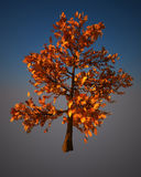 Digital-Baum. Stockfotografie