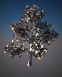 Digital-Baum. Stockbild