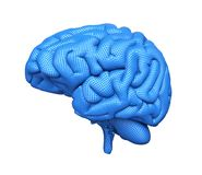 Digital Brain on white royalty free stock photos