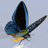 Digital Butterfly Royalty Free Stock Image