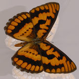 Digital Butterfly Stock Images