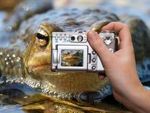 Digital Camera. True Toad closeup - Wildlife digital photography Stock Photo