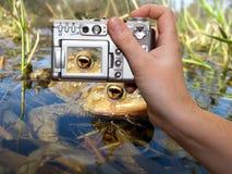 Digital Camera. True Toad Eye closeup - Wildlife digital photography Stock Photos