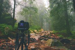 Digital camera on tripod in forest. Royalty Free Stock Photo