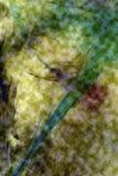 Digital changée, micrographe abstrait de soie d'araignée d'un Web Photos stock