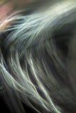 Digital changée, micrographe abstrait de soie d'araignée d'un Web Photo libre de droits