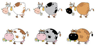 Digital collage of six cows Royalty Free Stock Photo