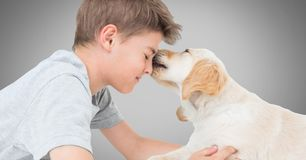 Boy against grey background with friendly dog licking his face Royalty Free Stock Photos
