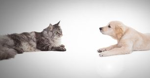 Cat and dog having a stare off Stock Image